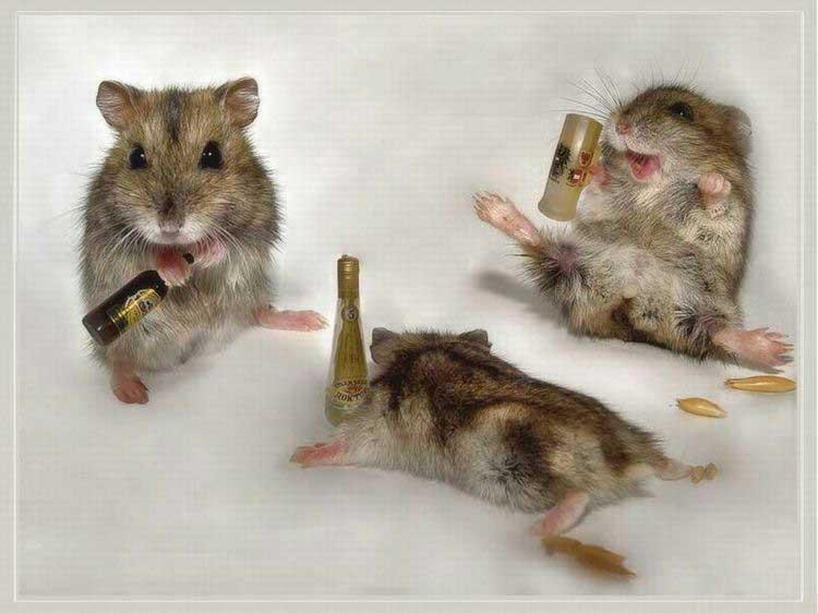 Пьяные хомячки