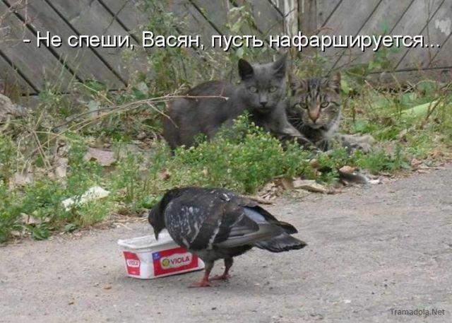 http://www.korova.ru/humor/pics/part6/51438193110523778.jpg