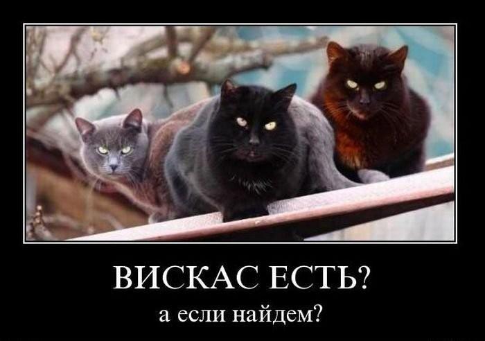 http://www.korova.ru/humor/pics/part6/647961809864790343.jpg