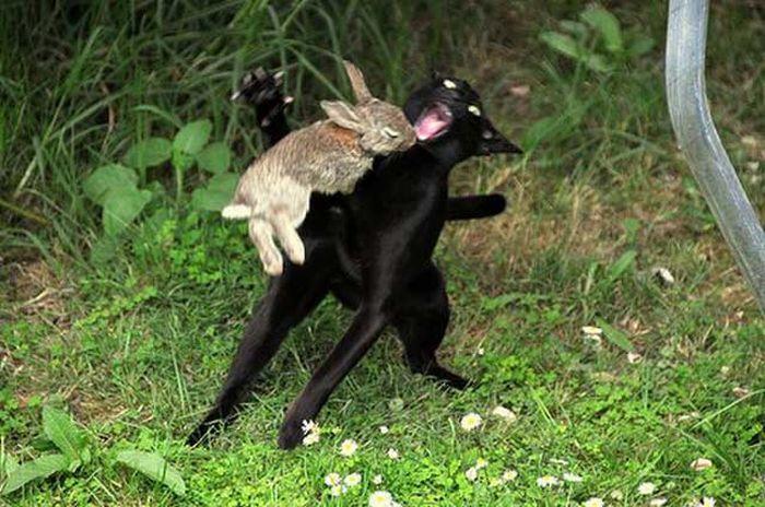 212Что опасно для кроликов