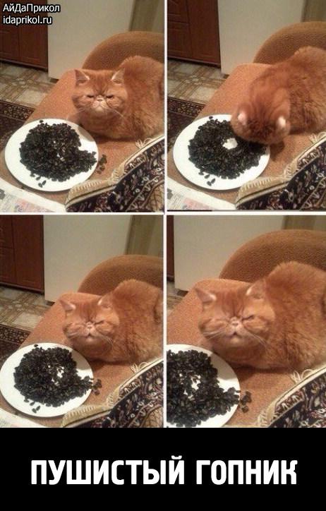 сигареты почему кот ест семечки хорошего психолога!Катепал Детский