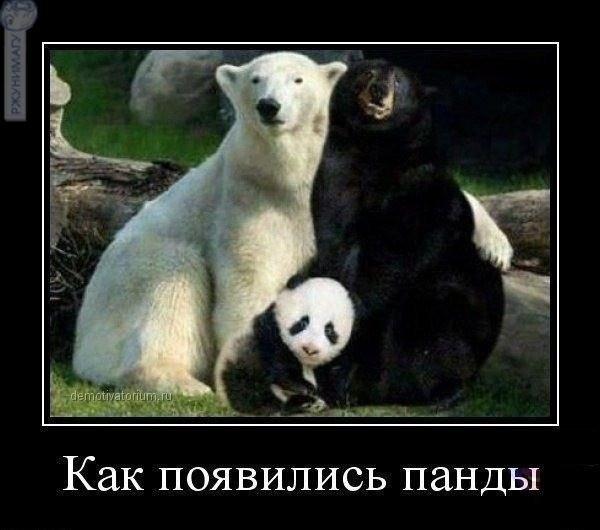 http://www.korova.ru/humor/pics/part8/998770062132834649.jpg